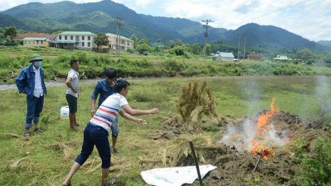 11 con bò nuôi thả tự do bị sét đánh chết tại Nghệ An
