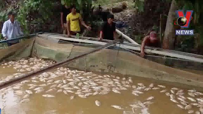 VIDEO: Đồng Nai thiệt hại 5.000 tấn cá do thủy điện xả lũ