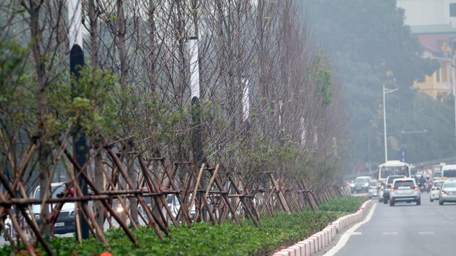 Thủ đô Hà Nội tạo cảnh quan từ đa dạng các loại cây xanh, cây cảnh