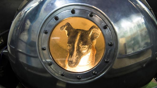 Chú chó Laika, sinh vật sống đầu tiên bay vào vũ trụ: 60 năm loài người vẫn rơi nước mắt