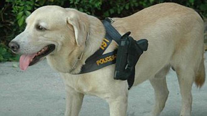 Covid-19, tình hình Covid-19, chó nghiệp vụ phát hiện Covid-19, tin tức quốc tế, thái lan huấn luyện chó phát hiện covid-19