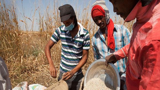 Cảnh báo khủng hoảng lương thực toàn cầu ngày càng trầm trọng