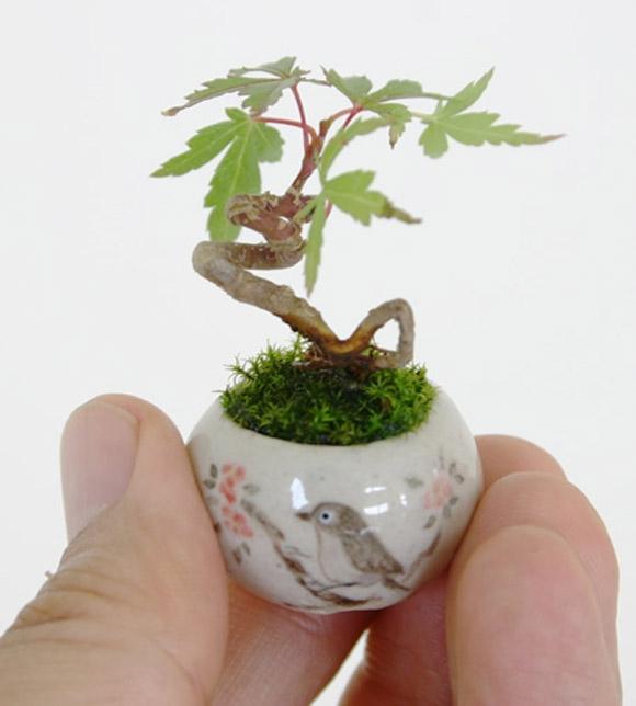 Quà tặng ngày 8 tháng 3, Quà tặng 8 3 cây cảnh mini, Tặng cây cảnh mini, cây cảnh mini, tặng quà 8/3, tặng cây cảnh mini ngày 8/3, quà 8/3, quà 8 3