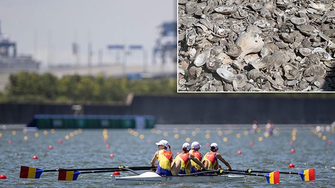 Sinh vật biển đe dọa quá trình tổ chức Olympic