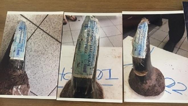 Khởi tố các đồng phạm của nhân viên Cục Hải quan Hà Nội đánh tráo ngà voi