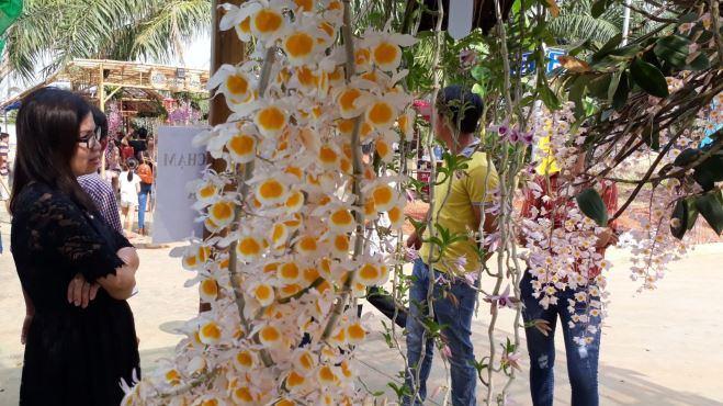 Ngắm những giò hoa lan tuyệt đẹp 'khoe sắc' tại Bình Phước