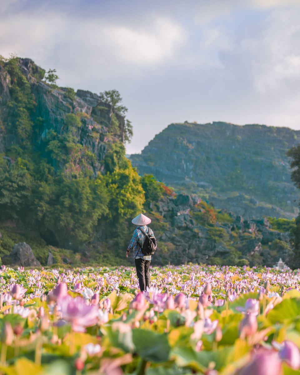 Hang Múa, Đầm sen hang múa, check -in mùa du lịch, Vạn lý trường thành phiên bản Việt, Hang Múa Ninh Bình