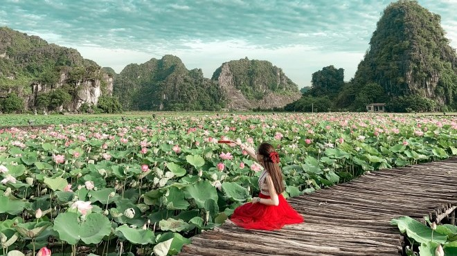 Đầm sen Hang Múa hút khách mùa du lịch