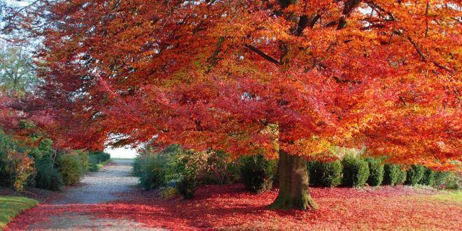 Trái tim mùa thu