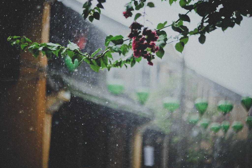 Dự báo thời tiết, thời tiết hôm nay, thời tiết, bão số 7, tin bão số 7, tin bão, bão trami, siêu bão trami, cơn bão trami, không khí lạnh, gió mùa đông Bắc, tin thời tiết