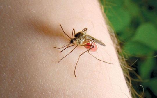 Sốt xuất huyết, Dấu hiệu sốt xuất huyết, Triệu trứng sốt xuất huyết, Dịch sốt xuất huyết, chữa sốt xuất huyết, biểu hiện sốt xuất huyết, sốt xuất huyết biểu hiện