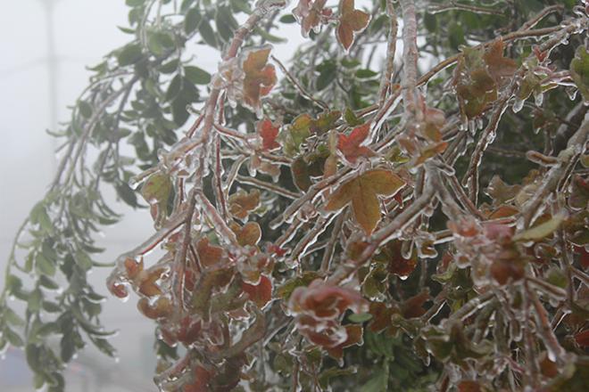 Dự báo thời tiết, Tin thời tiết, Thời tiết, Không khí lạnh, Nhiệt độ, Rét đậm, rét hại, thời tiết hà nội, thời tiết miền bắc, nhiệt độ hà nội, nhiệt độ miền bắc, băng giá