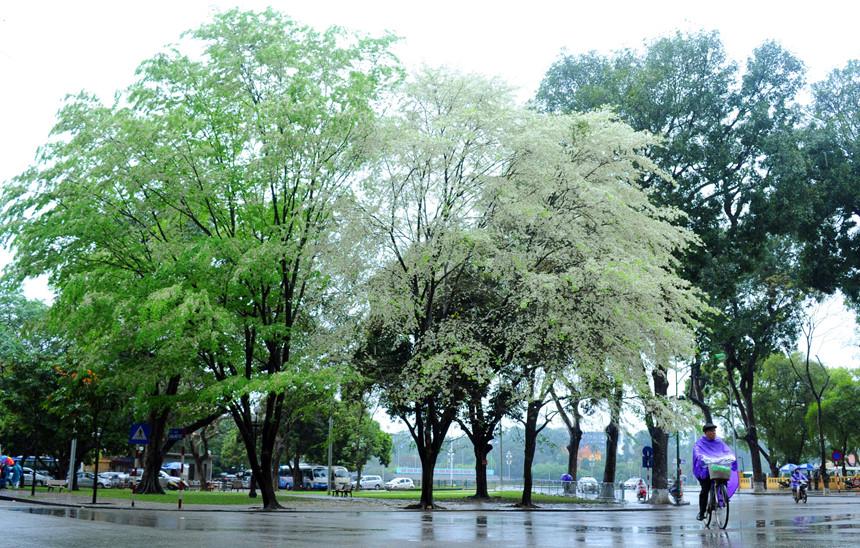 Dự báo thời tiết, Thời tiết 10 ngày tới, Thời tiết, Dự báo thời tiết 10 ngày tới, thời tiết hôm nay, tin thời tiết, nồm ẩm, nồm ẩm bao giờ hết, bao giờ hết nồm ẩm