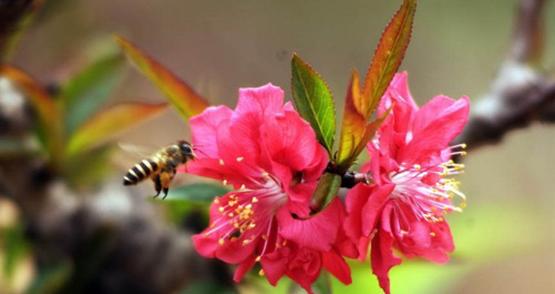 bài cúng ông táo, Văn khấn ông công ông táo, Bài cúng Ông Công Ông Táo, Mâm cúng Ông Công Ông Táo, van khan ong cong ong tao, bao cung ong cong ong tao, cúng táo quân