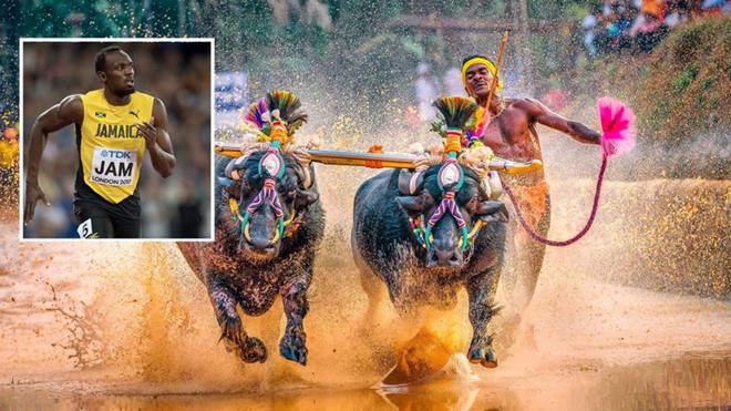 2 VĐV đua trâu Ấn Độ phá kỷ lục chạy 100m của Usain Bolt